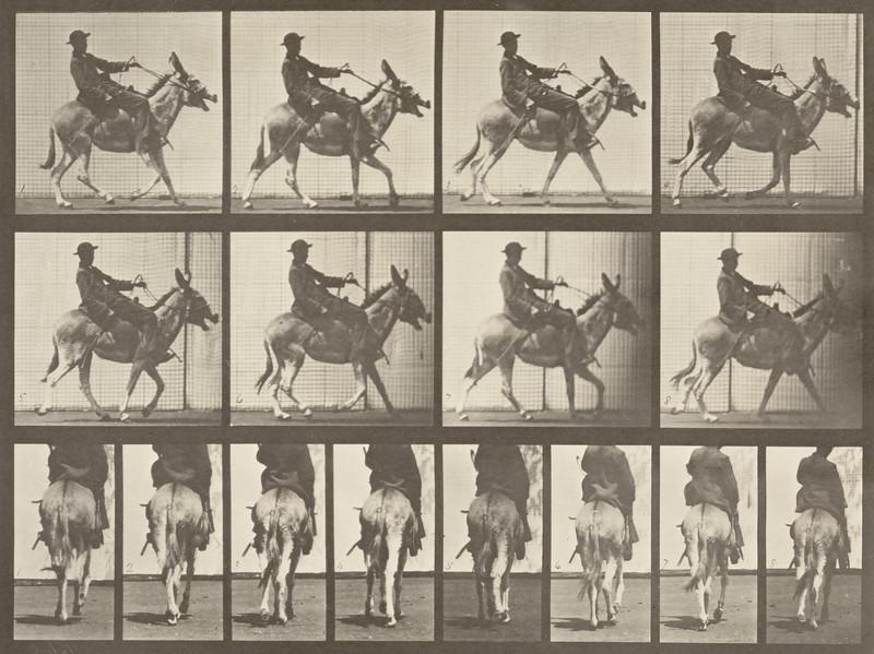 Horse Zoo ambling, irregular, saddled with rider (Animal Locomotion, 1887, plate 668)