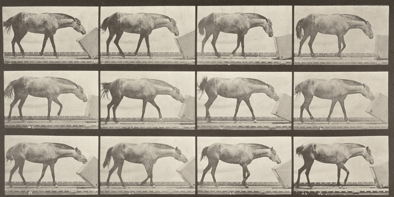 Horse Lotta rolling a box (Animal Locomotion, 1887, plate 657)