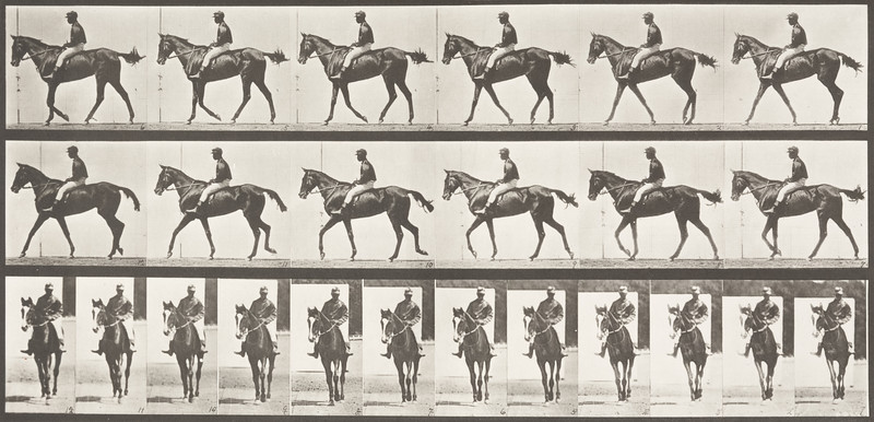 Horse Annie G. walking, saddled with a rider (Animal Locomotion, 1887, plate 580)