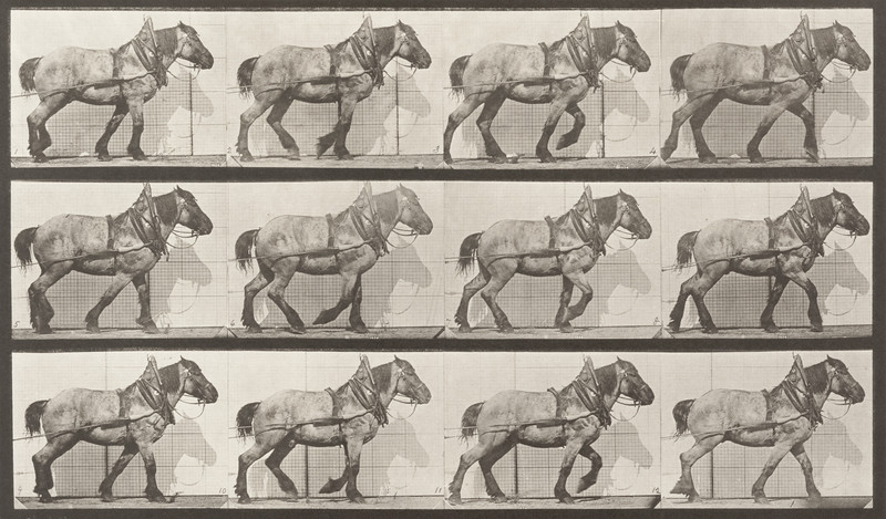 Horse Dusel hauling (Animal Locomotion, 1887, plate 565)