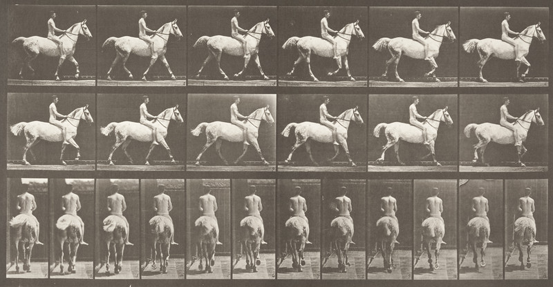 Horse Smith trotting, bareback with nude rider (Animal Locomotion, 1887, plate 602)
