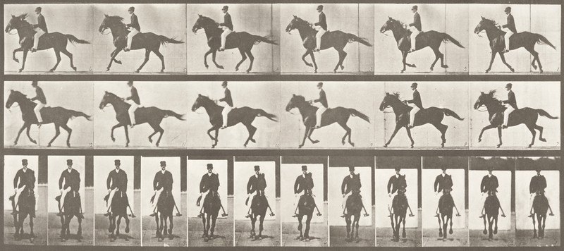 Horse Middleton cantering, saddled with rider (Animal Locomotion, 1887, plate 618)