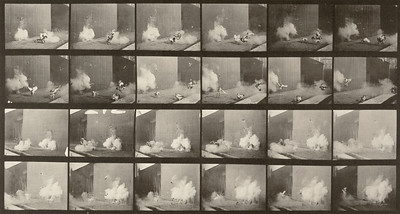 Chickens scared by a torpedo (Animal Locomotion, 1887, plate 781)