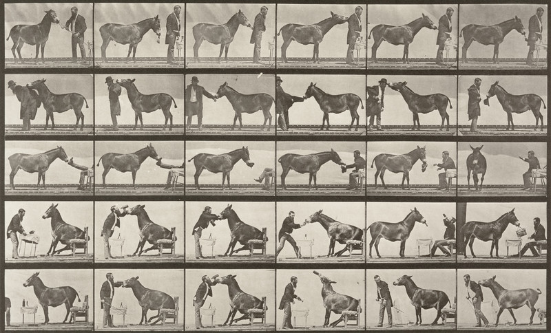 Horse Denver, various performances, at a table, etc., with trainer (Animal Locomotion, 1887, plate 664)
