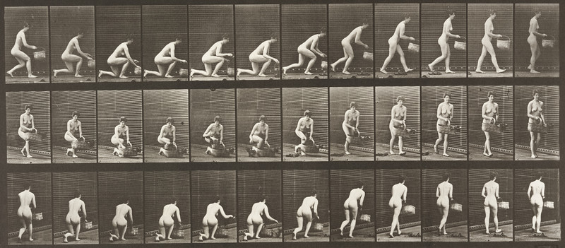 Nude woman kneeling on left knee with a basket in left hand and rising (Animal Locomotion, 1887, plate 251)