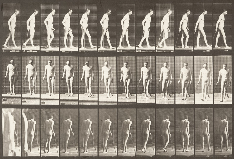 Nude man walking with cane (Animal Locomotion, 1887, plate 559)