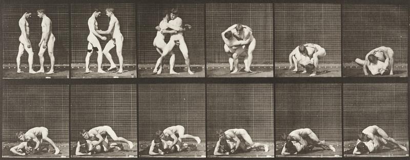 Nude men wrestling, lock (Animal Locomotion, 1887, plate 345)