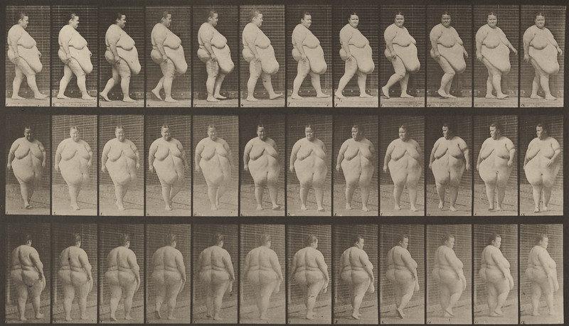 Overweight nude female walking and commencing to turn around (Animal Locomotion, 1887, plate 19)