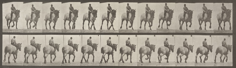 Horse Dusel trotting with bareback rider (Animal Locomotion, 1887, plate 599)