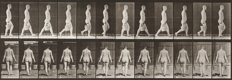 Nude man walking with a bucket of water in each hand (Animal Locomotion, 1887, plate 30)