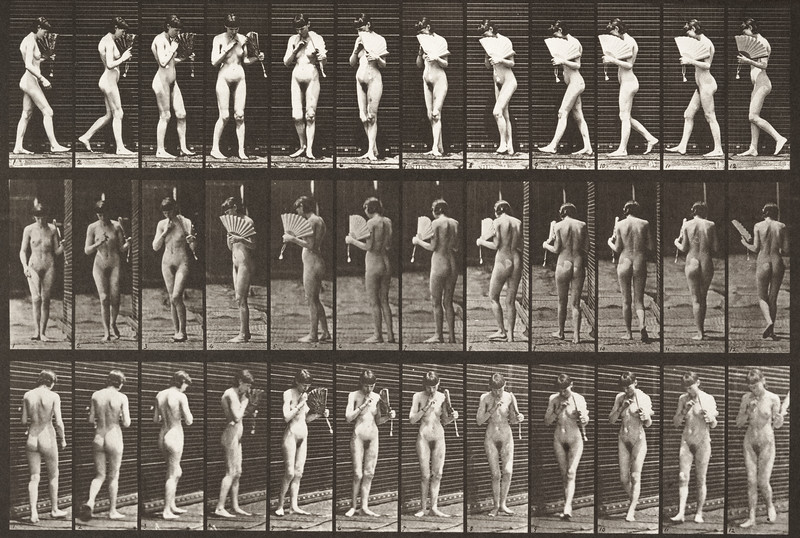 Nude woman walking, flirting a fan and turning around (Animal Locomotion, 1887, plate 46)