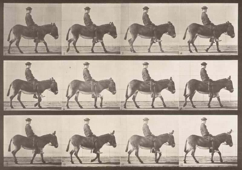 Horse Jennie walking, bareback with rider (Animal Locomotion, 1887, plate 665)