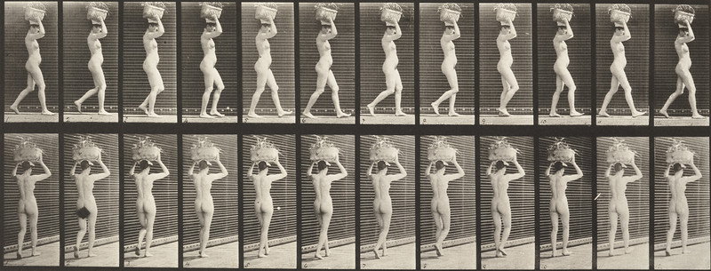 Nude woman walking and carrying basket on head (Animal Locomotion, 1887, plate 33)