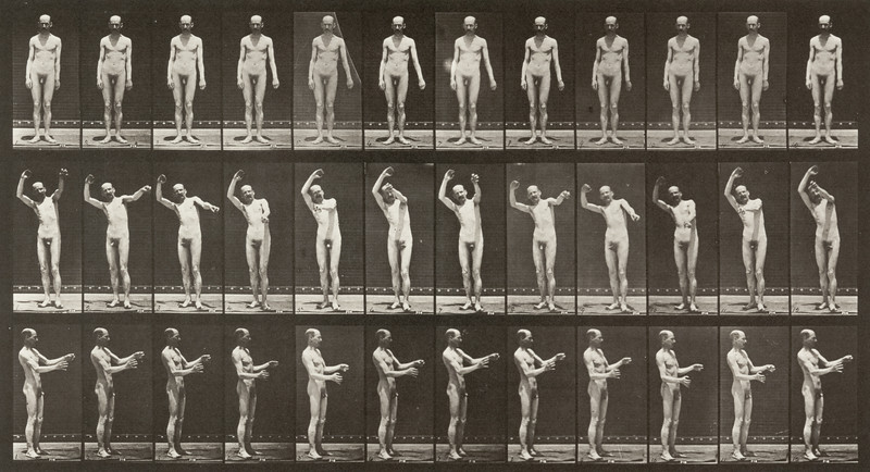 Nude man standing and moving arms (Animal Locomotion, 1887, plate 557)