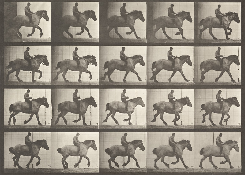 Horse Hansel cantering, bareback with rider (Animal Locomotion, 1887, plate 615)