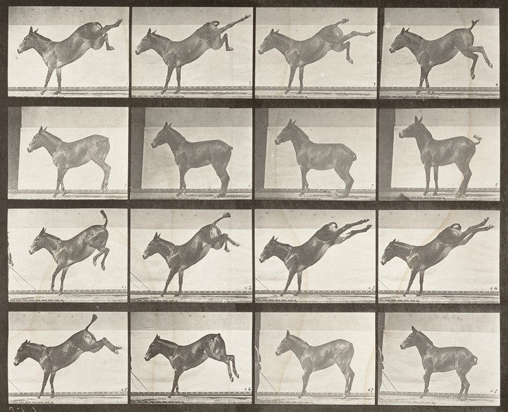 Horse Ruth kicking (Animal Locomotion, 1887, plate 658)