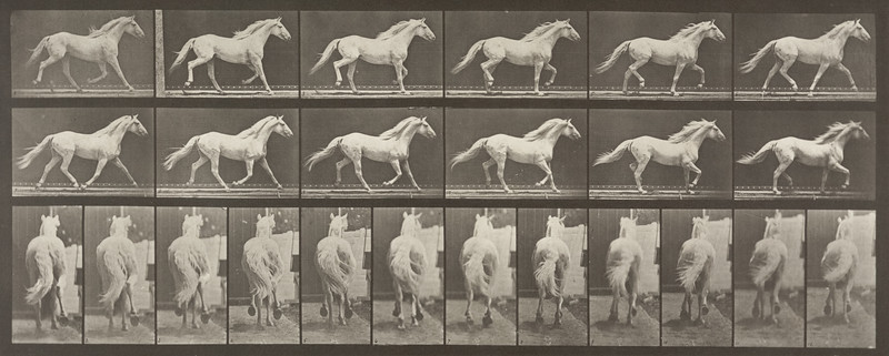 Horse Eagle trotting, free (Animal Locomotion, 1887, plate 596)