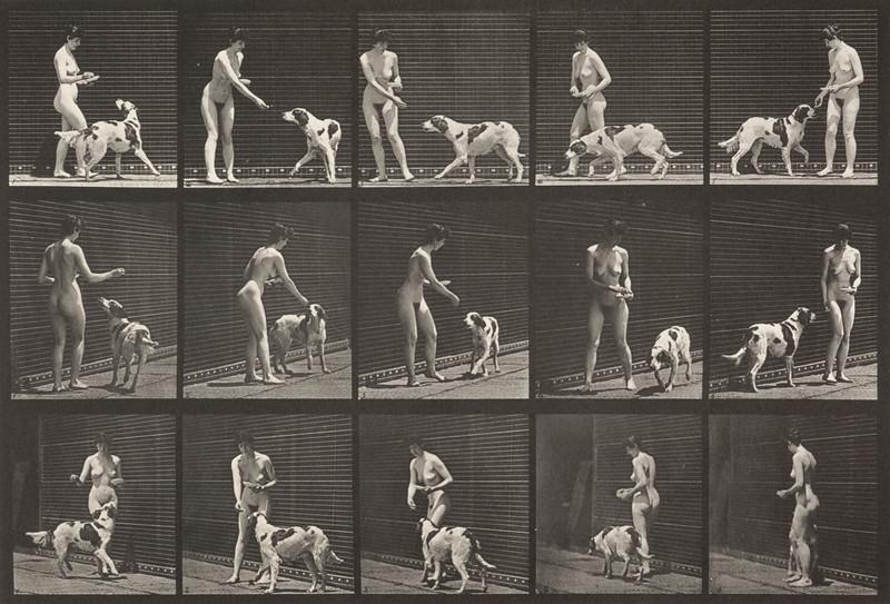 Nude woman feeding a dog (Animal Locomotion, 1887, plate 514)
