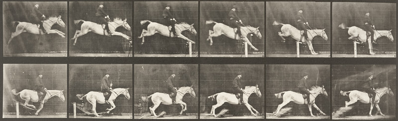 Horse Pandora jumping hurdle, saddled with a rider, knocking over the hurdle and landing (Animal Locomotion, 1887, plate 641)