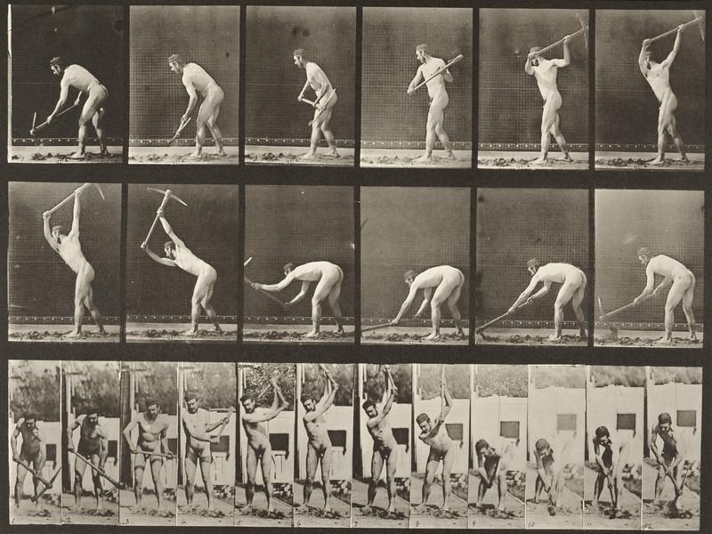 Nude farmer using a pick (Animal Locomotion, 1887, plate 385)