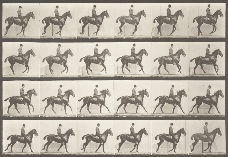 Horse Daisy cantering, saddled with rider (Animal Locomotion, 1887, plate 616)