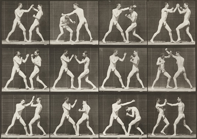 Two men in pelvis clothes boxing (Animal Locomotion, 1887, plate 336)