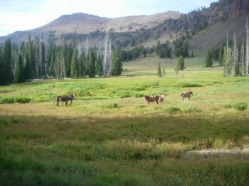 Wilderness Volunteers: 2017 Eagle Cap Wilderness, Wallowa-Whitman National Forest (Oregon)