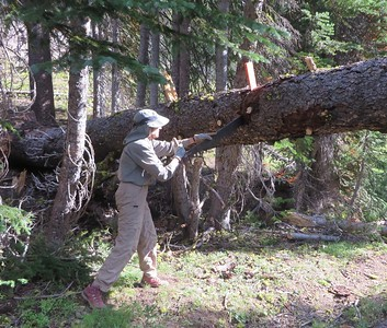 Wilderness Volunteers: 2017 Eagle Cap Wilderness, Wallowa-Whitman National Forest (Oregon)