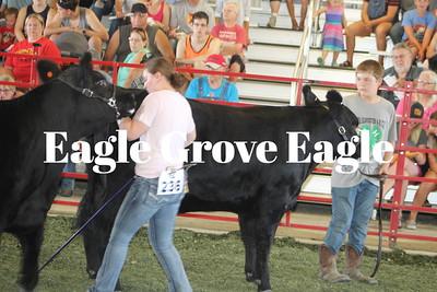 Fair 2019-Beef Show