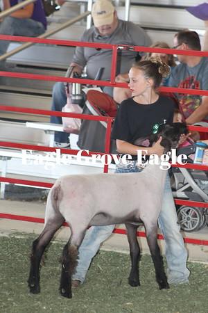 Fair 2019-Sheep Show