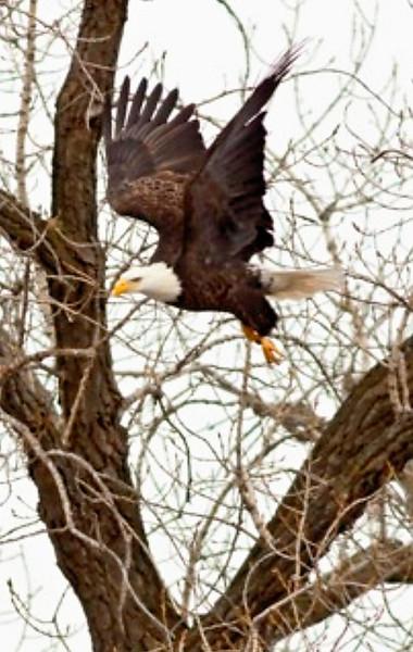 RM Flight - Flight of an Eagle