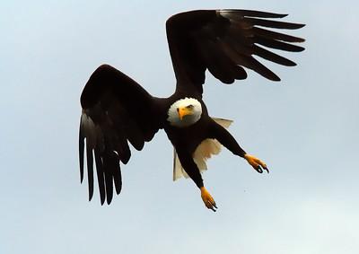~ Wings of Glory ~