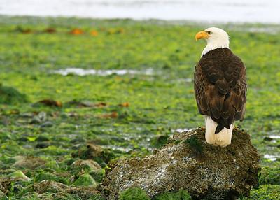 ~ Eagle Eye ~