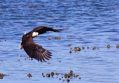 ~ Wings of Power ~