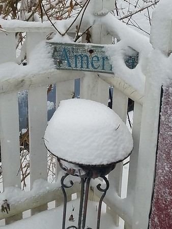 Juraye Moran sent us this snowy scene from her Pittsfield backyard.