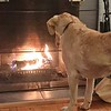 "Tina Whitmore sent us this photo and writes, ""My recently adopted rescue pup from California has no clue what to make of either the snow...or the fire In the fireplace."" (2/2)"