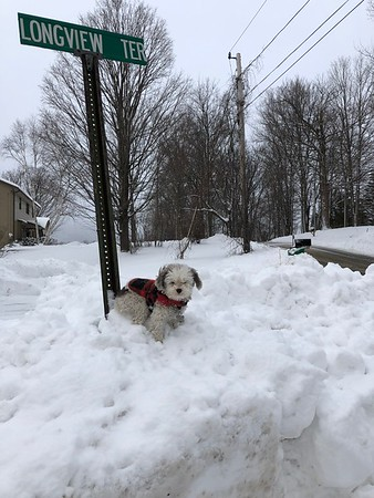 """Wendy Penner sent us this photo of her dog, Peewee, out in the snow, with the caption, """"king of the terrace."""""""