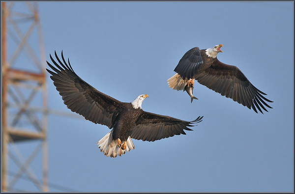 Eagles !!