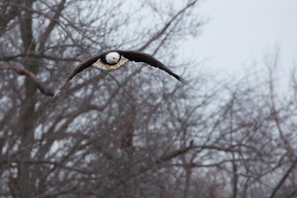 Eagles 02222015