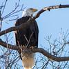 eagle 1k10