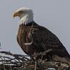 eagle                       1211a