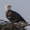 eagle                       1011a