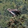 eagle 211