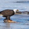 eagle         1111