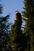 Canada eagles 14 (2010)