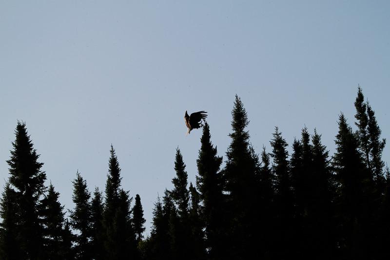 Canada eagles 17 (2010)