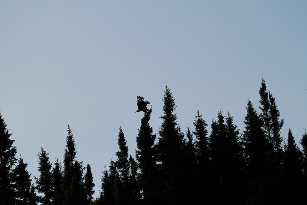 Canada eagles 18 (2010)