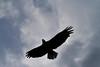 Canada eagles 7 (2010)