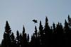 Canada eagles 16 (2010)