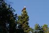 Canada eagles 6 (2010)